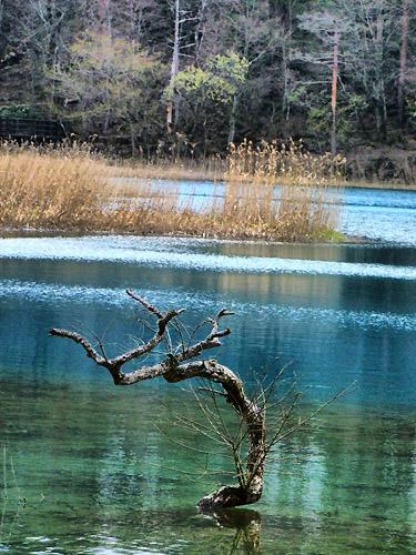 湖面のオブジェ