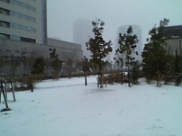 きむきむのぷーある日記_雪景色1