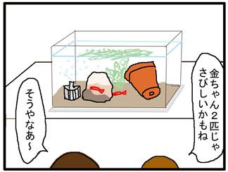 金魚401