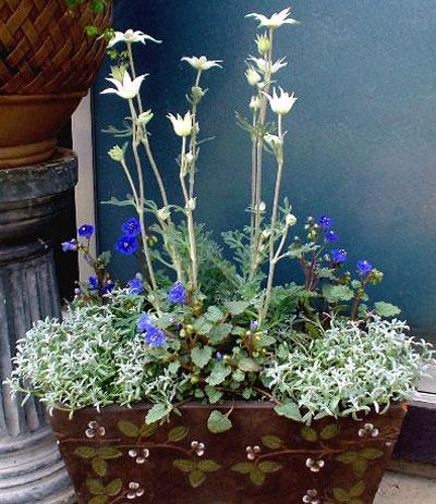 花の寄せ植え1