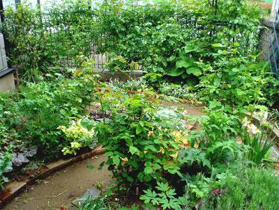 S邸お庭4