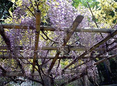 フジ 紫2