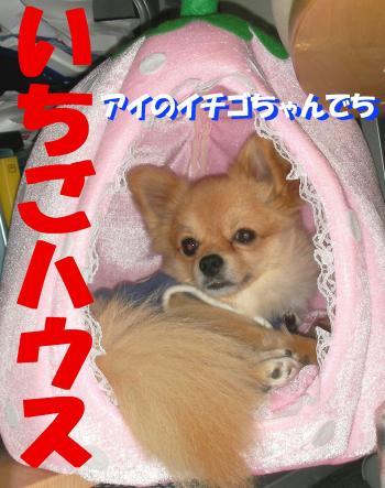 SA071120b_convert_20080409012432.jpg