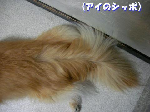SA080226b_convert_20080319211958.jpg