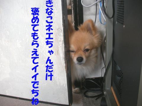 SA080331b_convert_20080405021819.jpg