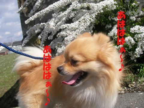 SA080331d_convert_20080405024831.jpg