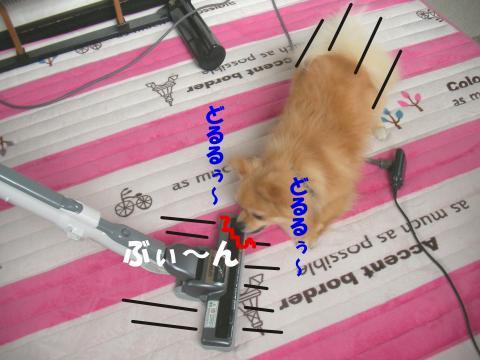 SA080413b_convert_20080415025331.jpg