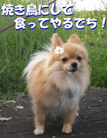 SA080414v22_convert_20080418031453.jpg
