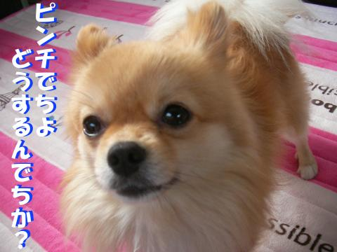 SA080420b_convert_20080523025829.jpg