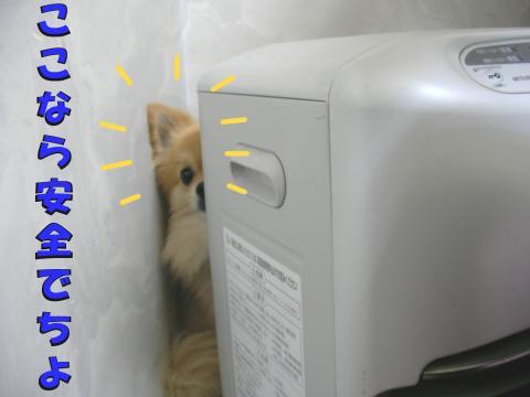 SA080430b_convert_20080512183909.jpg