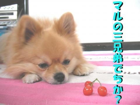 SA080512g_convert_20080514015053.jpg