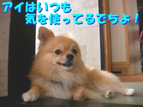 SA080525a_convert_20080601132307.jpg