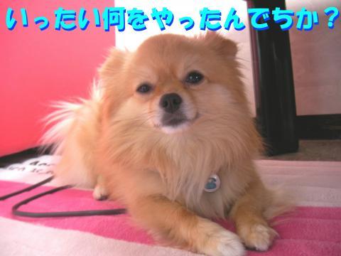 SA080601a_convert_20080611030948.jpg