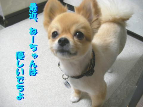 SA080715b_convert_20080721162643.jpg