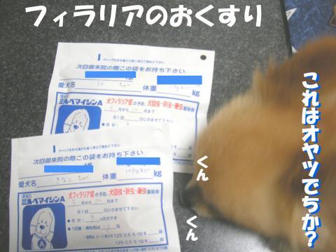 SH080407h_convert_20080410144432.jpg