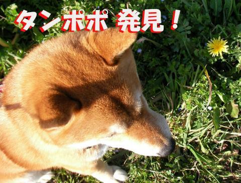 SK080315cc_convert_20080316110140.jpg