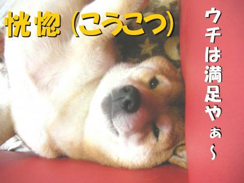 SK080319l_convert_20080412234543.jpg
