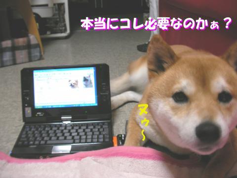 SK080630b_convert_20080701132549.jpg