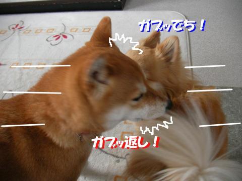 SW080224e_convert_20080330213534.jpg