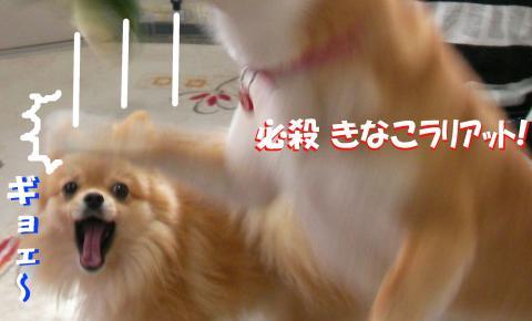 SW080310y_convert_20080331013939.jpg