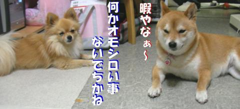 SW080313j_convert_20080326140103.jpg