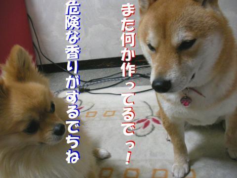 SW080314e_convert_20080329184334.jpg