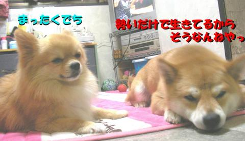 SW080414aa_convert_20080503042045.jpg