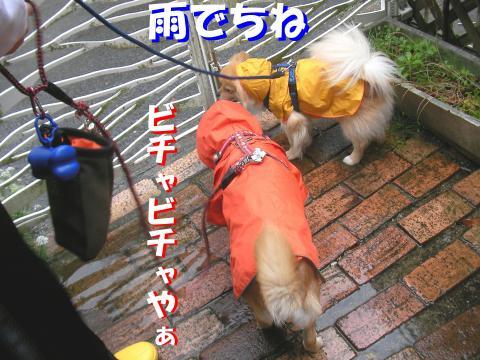 SW080510a_convert_20080511165508.jpg