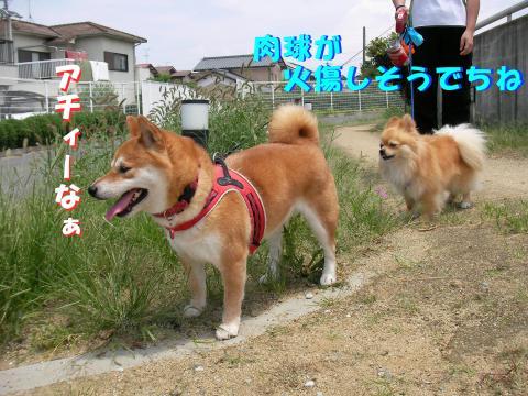 SW080705b_convert_20080706150102.jpg