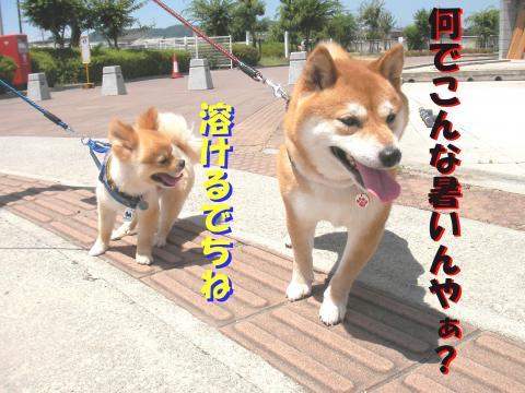 SW080726a_convert_20080726234132.jpg
