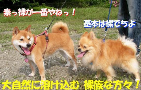 SWs080616y_convert_20080625020026.jpg