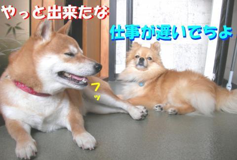SWs080616z_convert_20080622184101.jpg