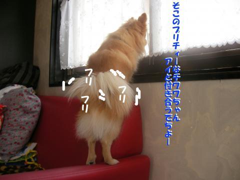 Sa080217h_convert_20080325015404.jpg