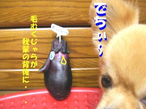 Snasuc_convert_20080711232753.jpg