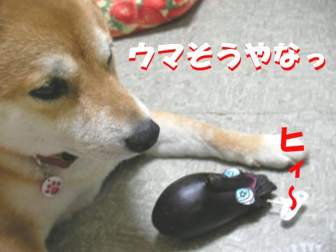 Snasue_convert_20080711224337.jpg
