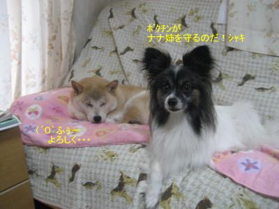 myu-sanchi.jpg