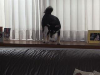 kinako出窓1