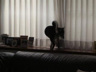kinako出窓3