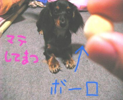 1_convert_20080408215435.jpg