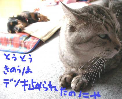 1_convert_20080414210749.jpg