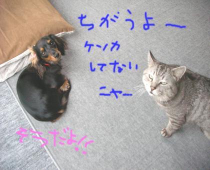 2_convert_20080426132106.jpg