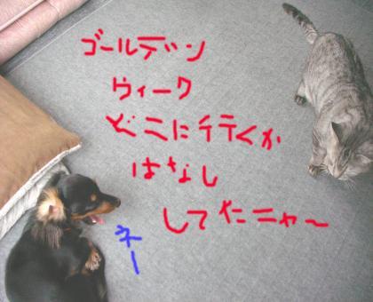 3_convert_20080426132131.jpg