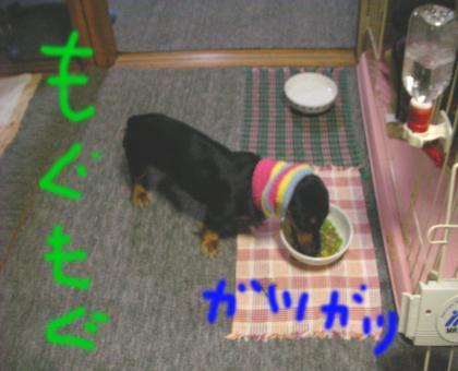 4_convert_20080417231949.jpg