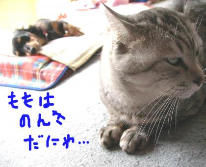 5_convert_20080414210859.jpg