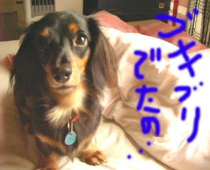 goki_convert_20080619204131.jpg