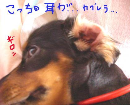 kaburera_convert_20080731203739.jpg