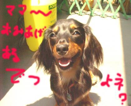 omiage_convert_20080615150732.jpg