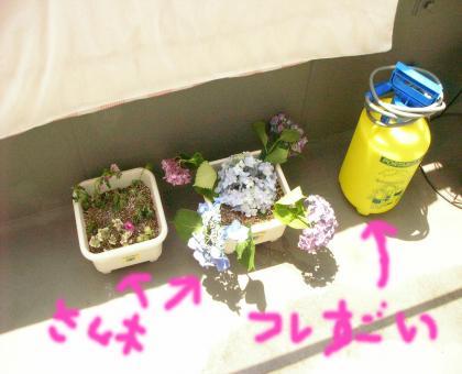 sugoi_convert_20080616220259.jpg