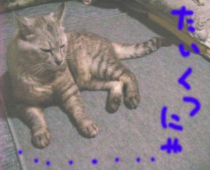 taikutu_convert_20080710202559.jpg