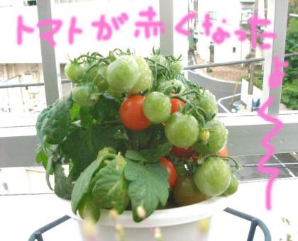 tomato_convert_20080605204556.jpg